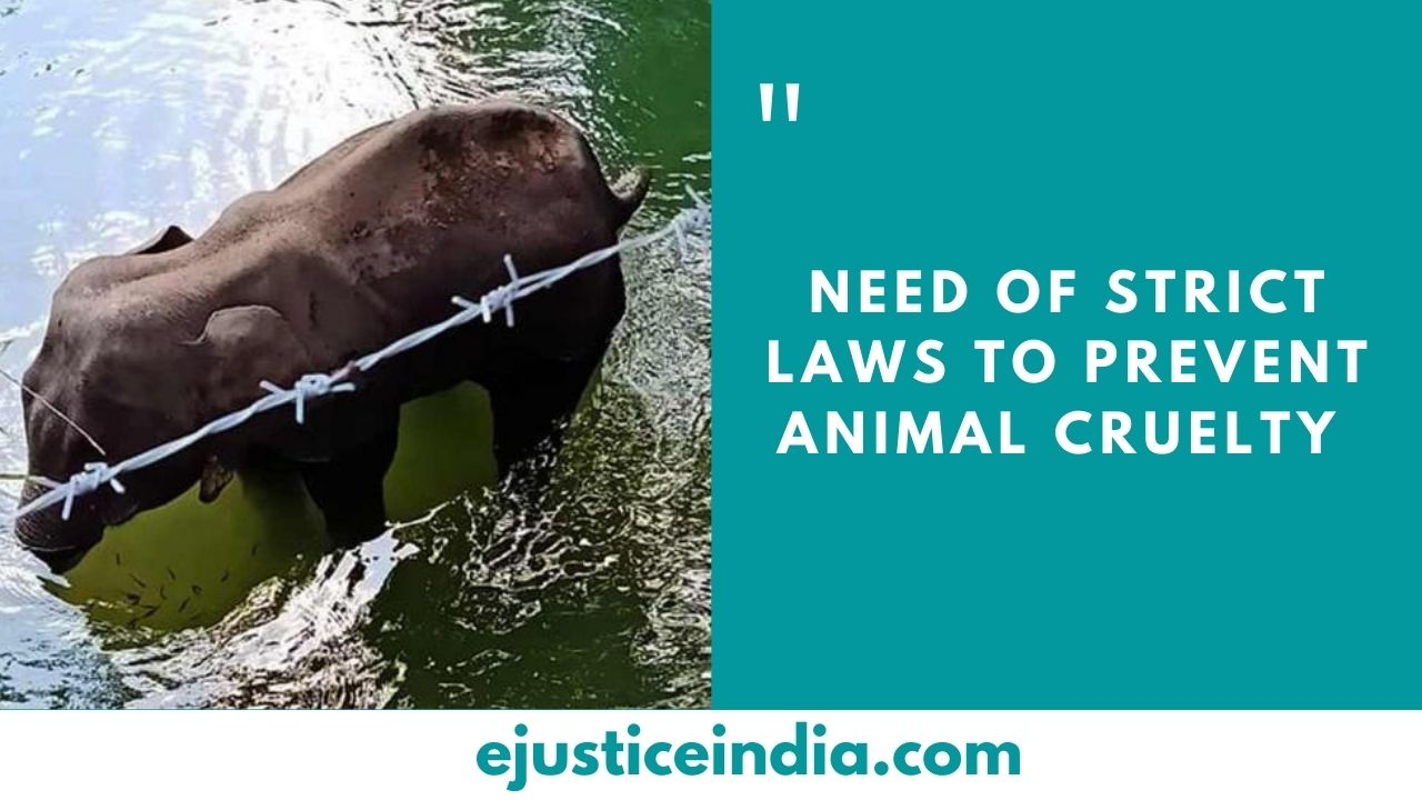 NEED OF STRICT LAWS TO PREVENT ANIMAL CRUELTY